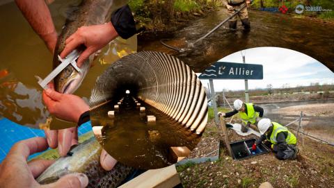 Les suivis scientifiques permettent d'évaluer l'efficacité des aménagements réalisés pour préserver la biodiversité aquatique.